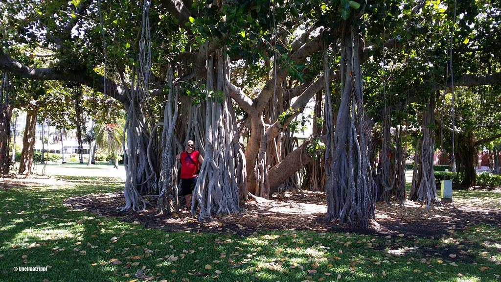 Puisto Townsvillessä, Australia