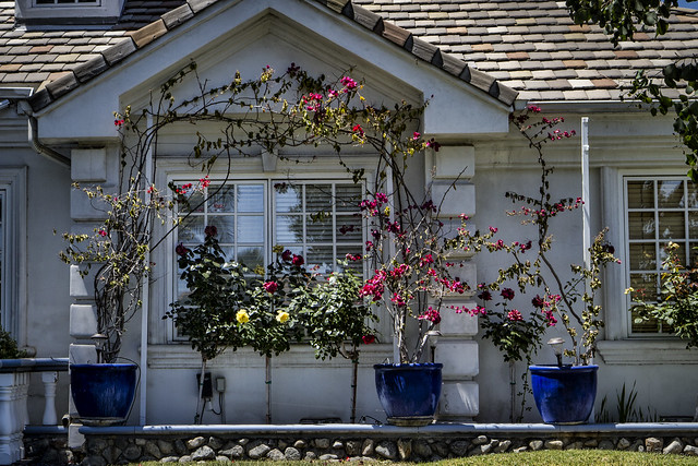 Bougainvillea framed window