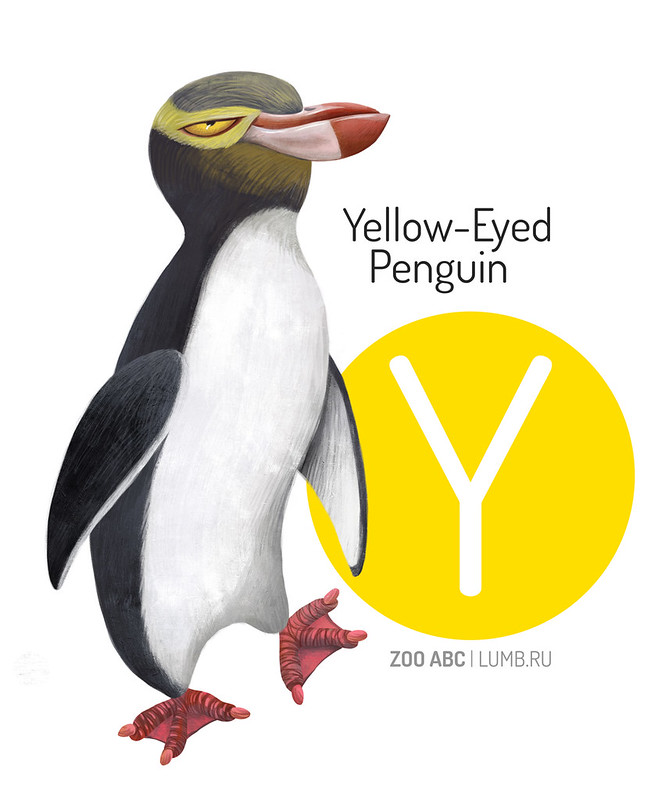 Y-yellow-eyed-penguin