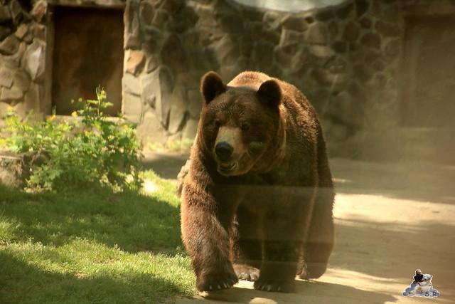Eisbär Fiete im Sosto Zoo 28.05.2017 077