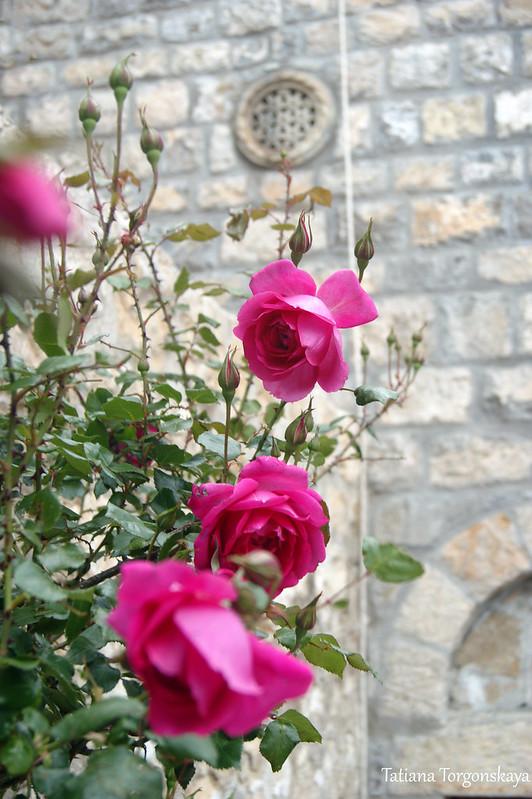 Розы и окно-розетка церкви  Св. архидиакона Стефана