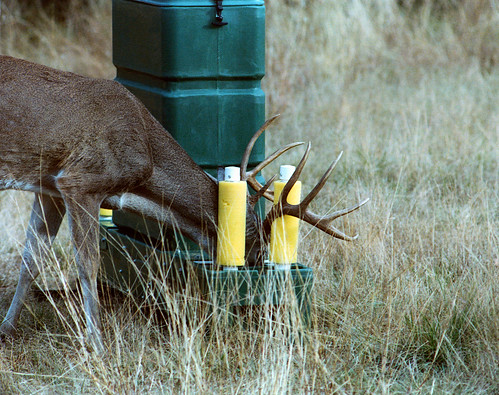 "ARS-patented ""4-poster"" device for deer"