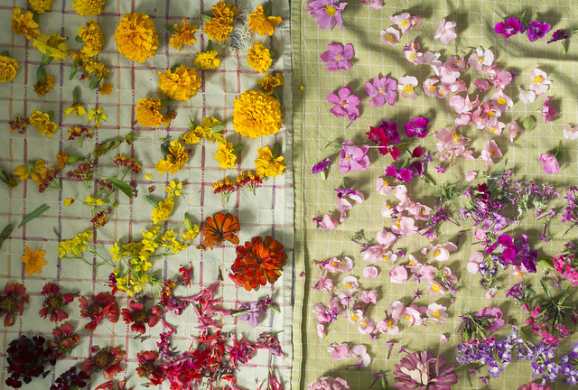 flowers for dyeing