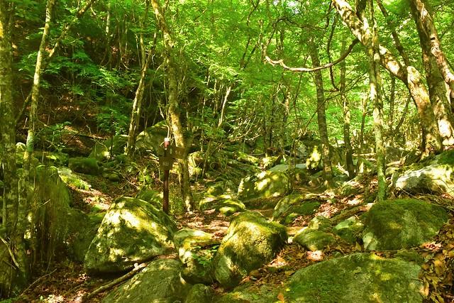 新緑の西丹沢・畦ヶ丸 日帰り登山
