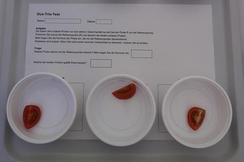 """Tomaten-Geschmackstest (am Stand """"Wie schmecken klimafreundliche Tomaten?"""" bei der Osnabrücker Campus Nacht)"""
