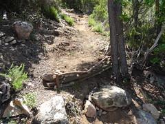 Le chemin dans la montée(-descente) de Fugulina après les travaux