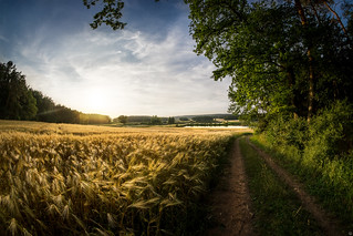 Grainfield in the evening | by Cle Manuel