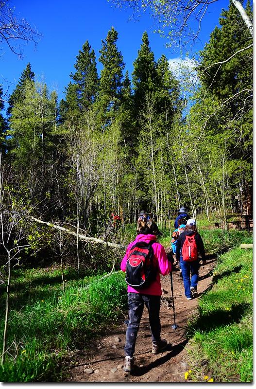 Into the Aspen Grove 1