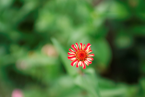 Thin DOF at 30mm | by ChristianRock
