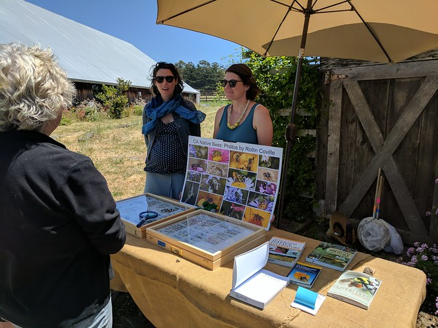 Native bee talk in Marin today