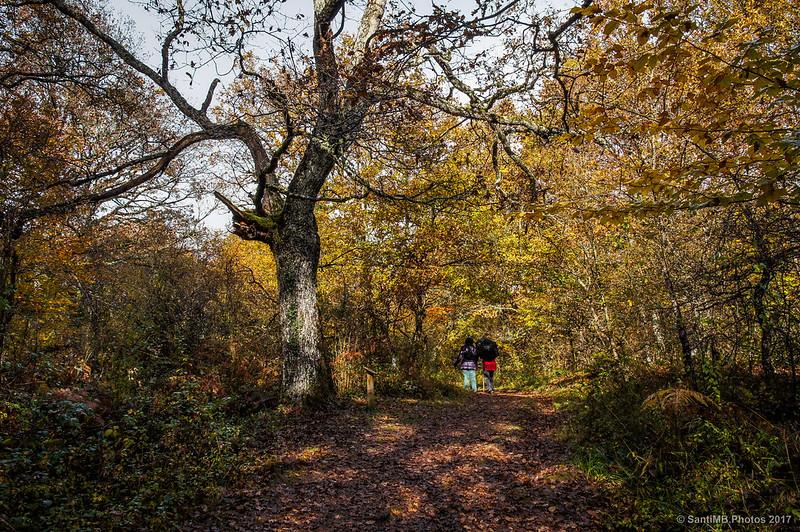 Excursionistas en el sendero de los Robles Milenarios