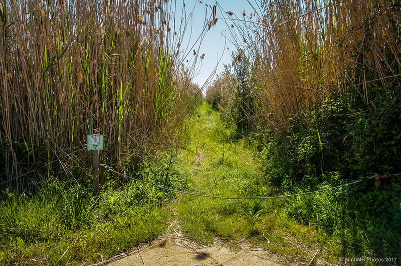 Caminos prohibidos en el Delta del Llobregat