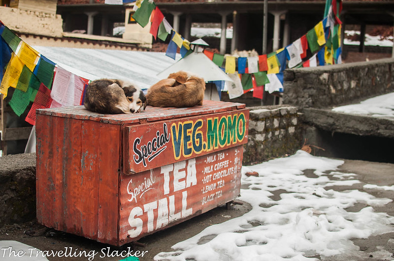 Offbeat Manali (22)