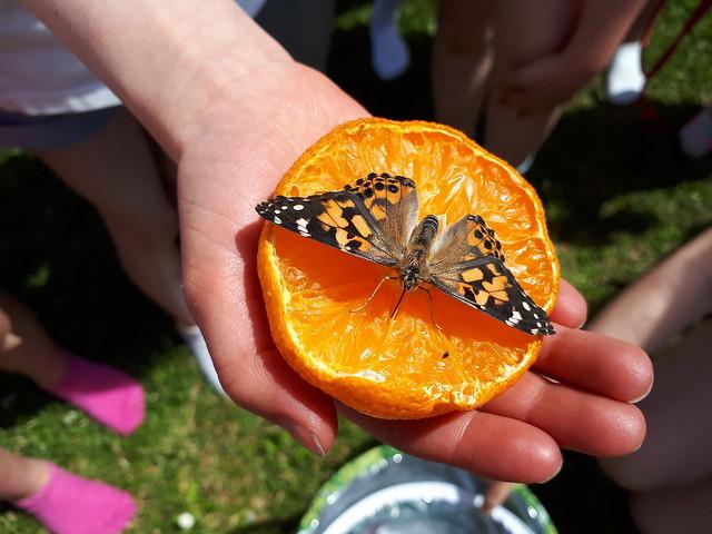 From Caterpillars to Butterflies