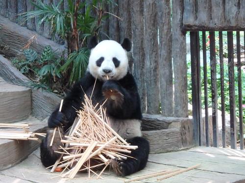 chiang-mai-zoo-12