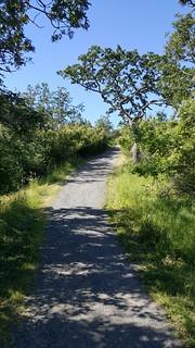 Mt. Tolmie park trail