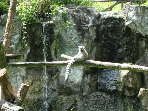 chiang-mai-zoo-8