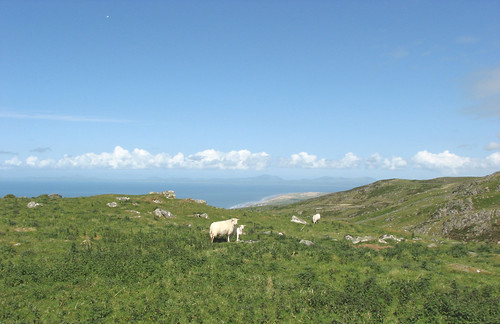 Sheep & Lleyn Peninsula
