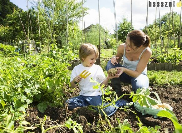 Family-garden_583_426