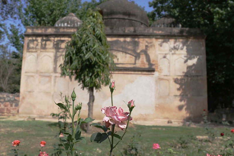 City Hangout - Rose Garden of England, Lodhi Gardens