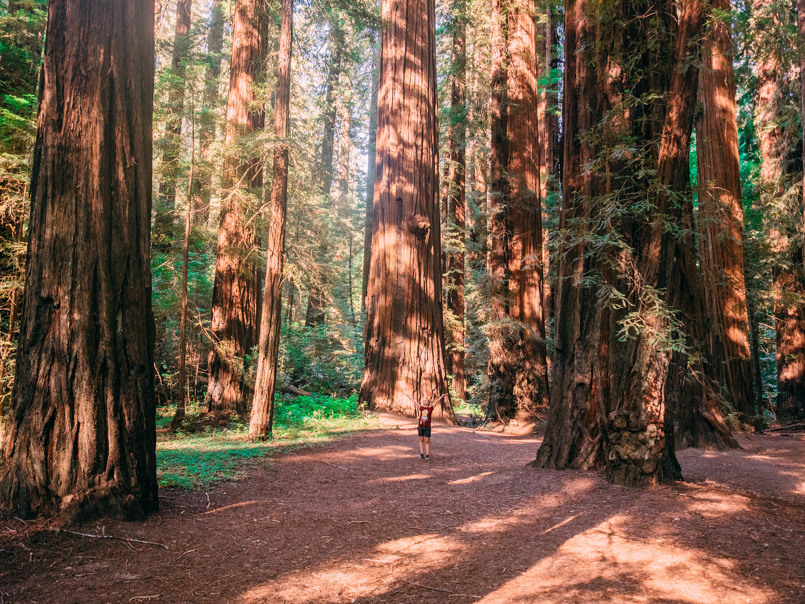 Redwoods-16