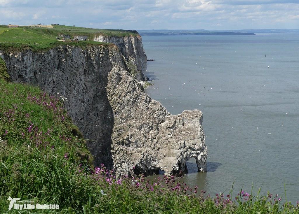 P1080339 - Bempton Cliffs
