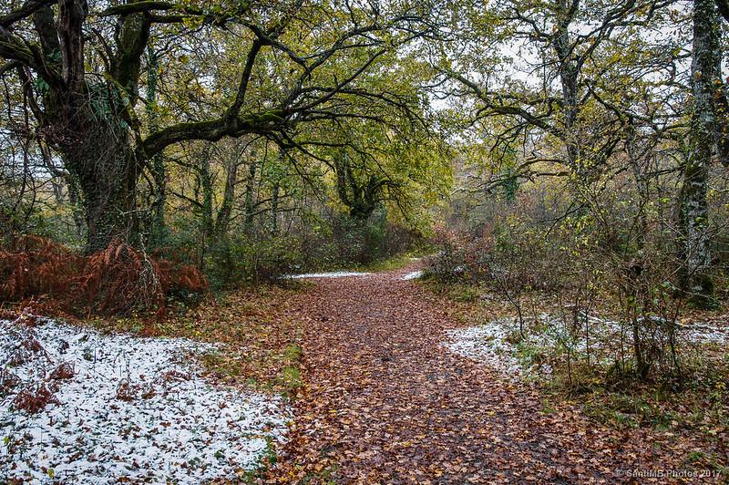 Roble centenario del Bosque de Orgi