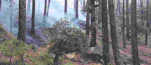 वनाग्नि संकट से जूझता हिमालय उत्तराखण्ड