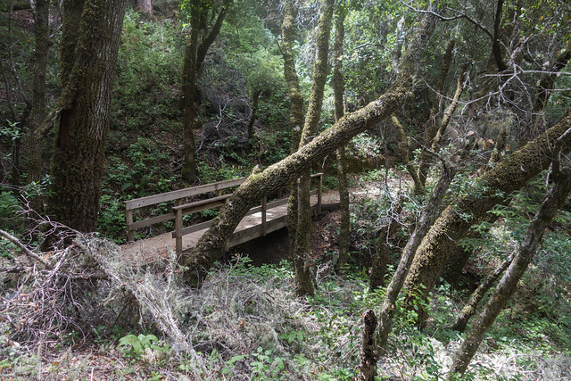 Stevens Creek Nature Trail (B)