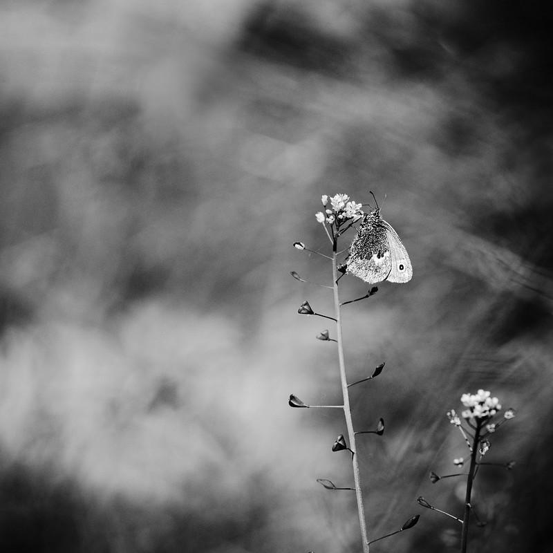 Perdu sur une fleur. 34127854374_16c829081d_c