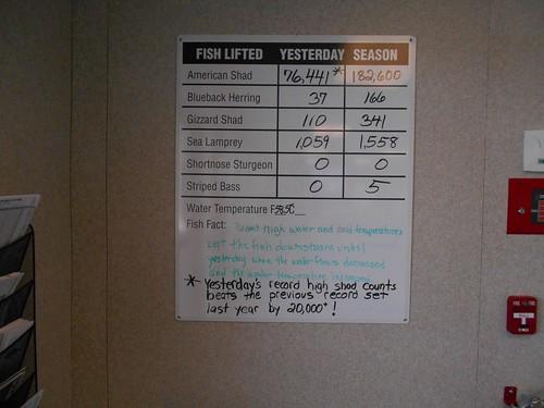 Fish elevator totals