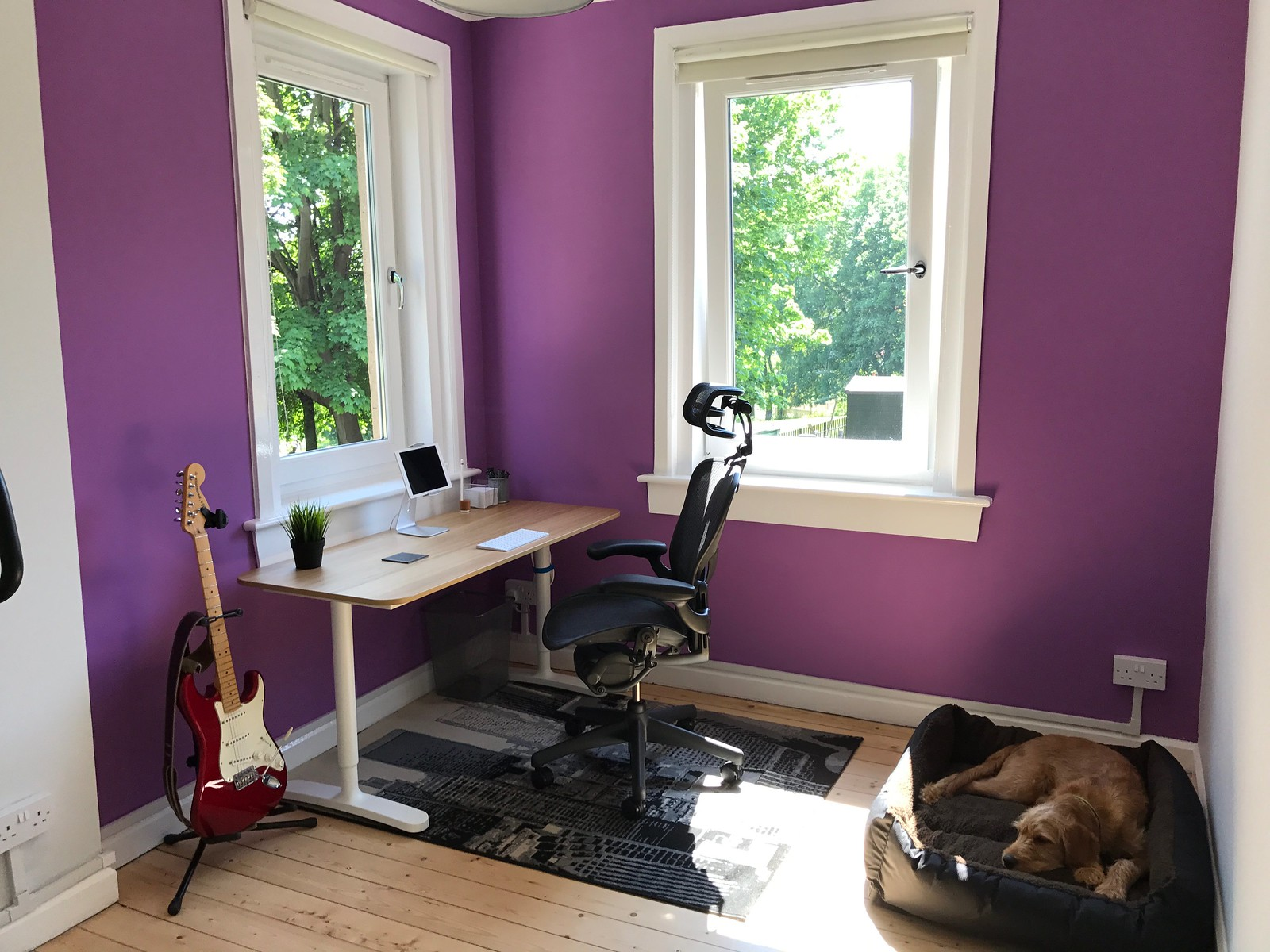 The finished office, closely matching the concept, showing the desk, chair, guitar, and dog in his new bed. The two adjoining walls which bracket the workspace are painted a cheerful purple, with the remaining walls a very soft grey. The woodwork and ceiling are white. The floor has been restored to its natural pine planks, varnished.