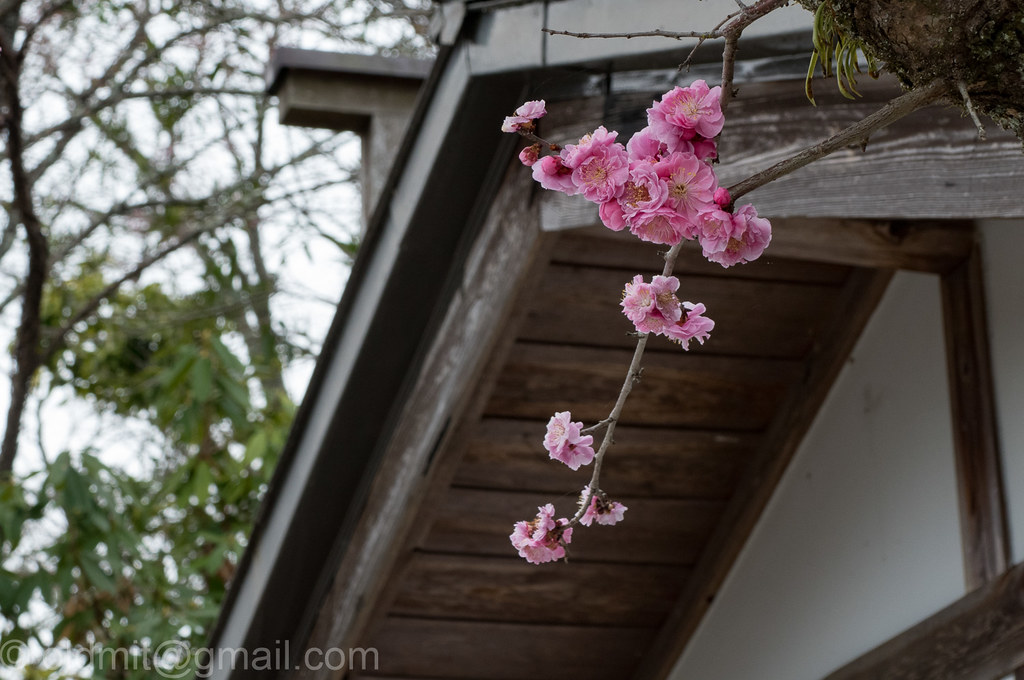 Немного слов и фото. Япония, 30 марта - 17 апреля. Киото и окрестности, Нагоя, Хида Фурукава, Матсумото.