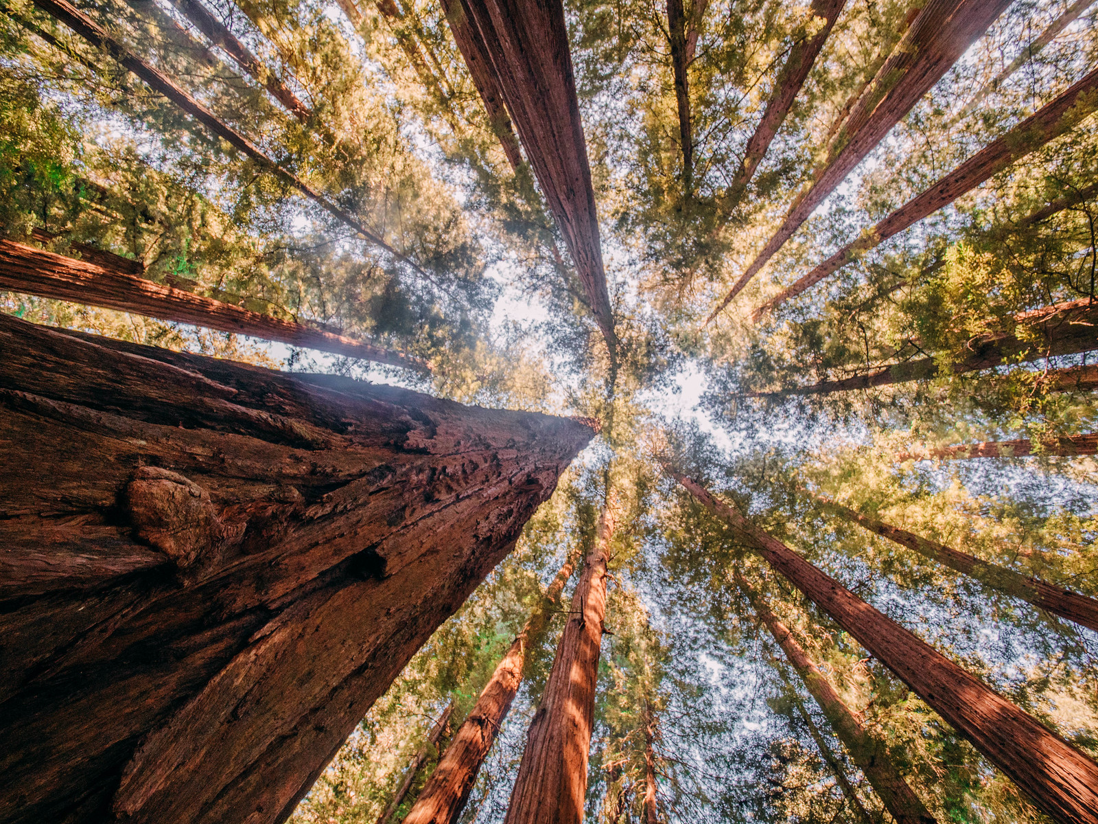 Redwoods-15
