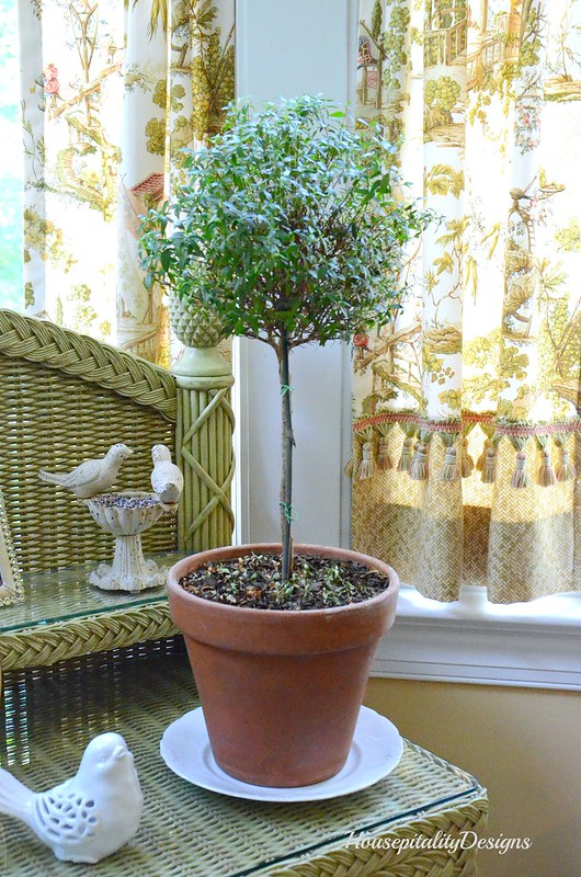 Dwarf Myrtle-Housepitality Designs