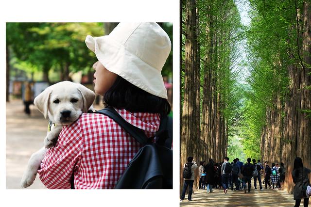10 Patty Villegas - The Lifestyle Wanderer - Seoul - Korea - Wendys - Kimchi Chicken Fillet - Nami Island -3