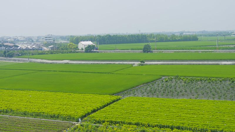 蓮 --鄉村田園之美