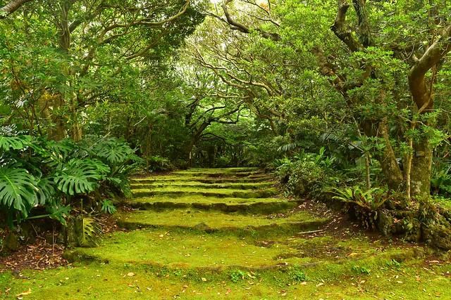 もののけの森の雰囲気漂う八丈植物公園