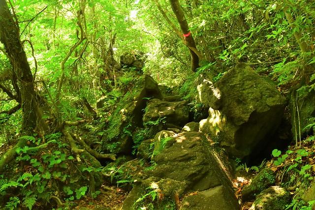 開聞岳 苔と緑の登山道