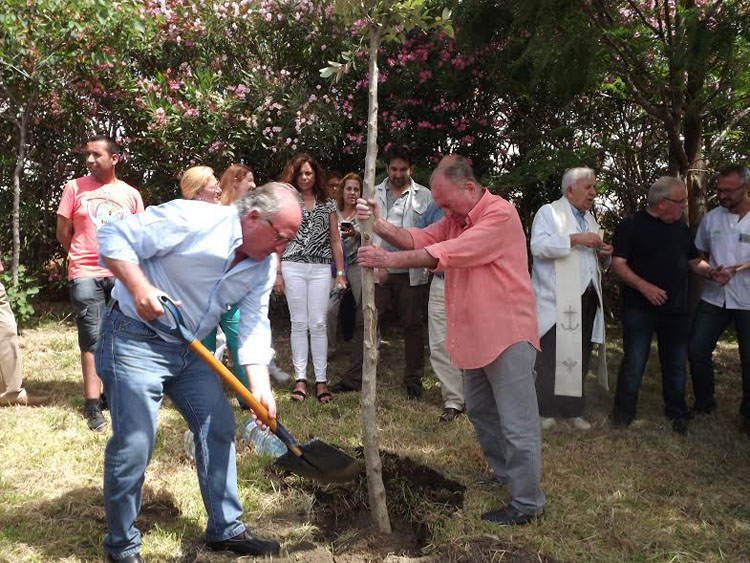 plantacion arbol1