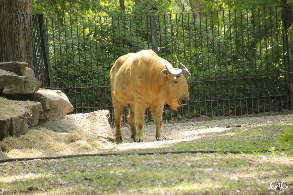Tierpark Friedrichsfelde 28.05.1720