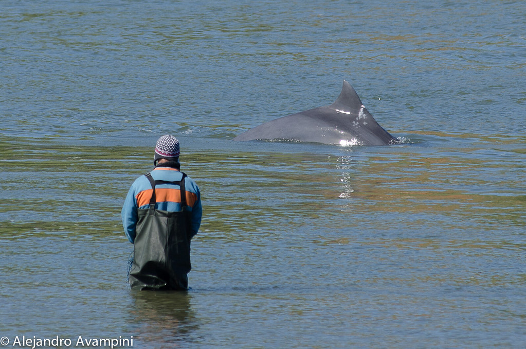 Pescador y delfin de tahina