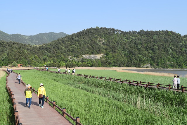 Suncheon Bay Wetland (15)