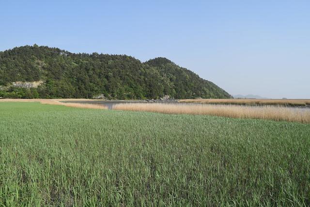 Suncheon Bay Wetland (14)