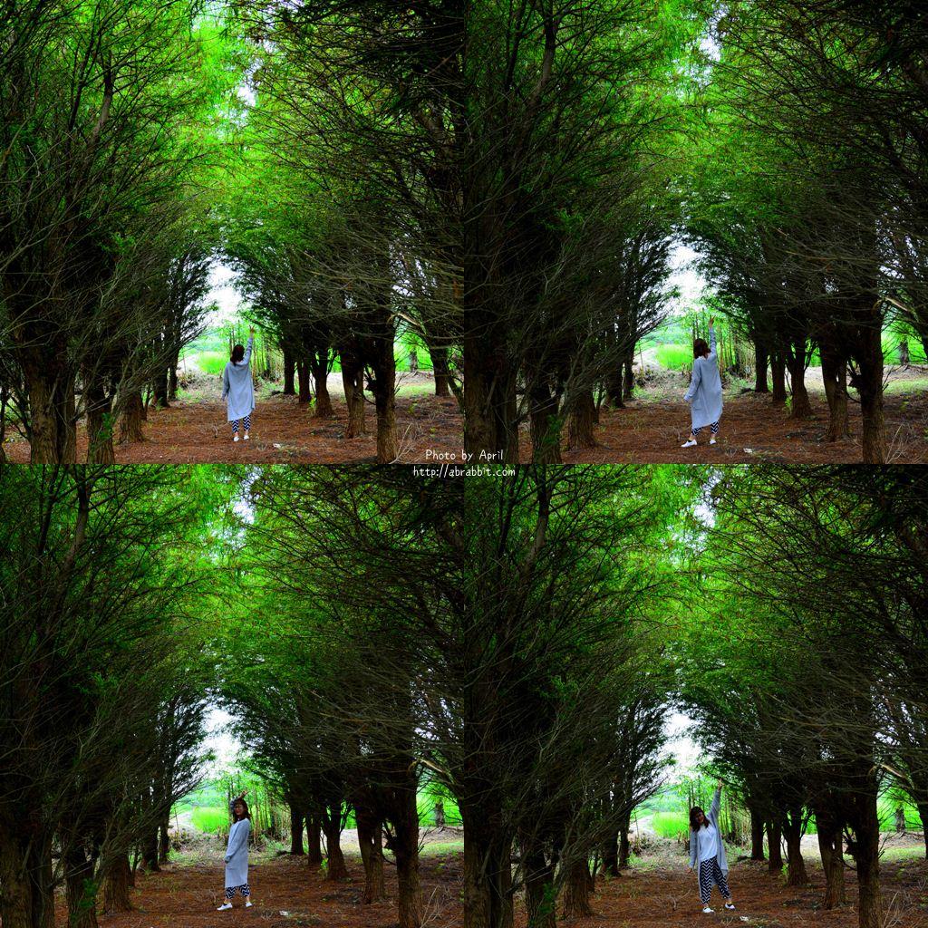 34796934541 cab097b107 o - 台中清水|清水龍貓隧道、田邊荷花池、三太宮塗鴉牆、綠色天橋隧道