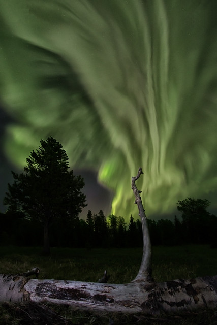 Fallen Tree Beneath Aurora