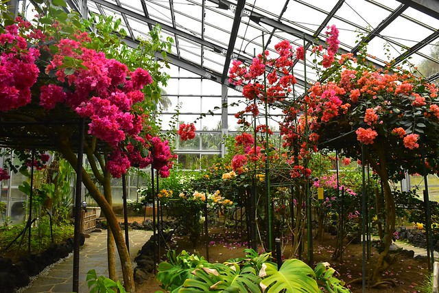 八丈島・八丈植物公園 温室に咲く花