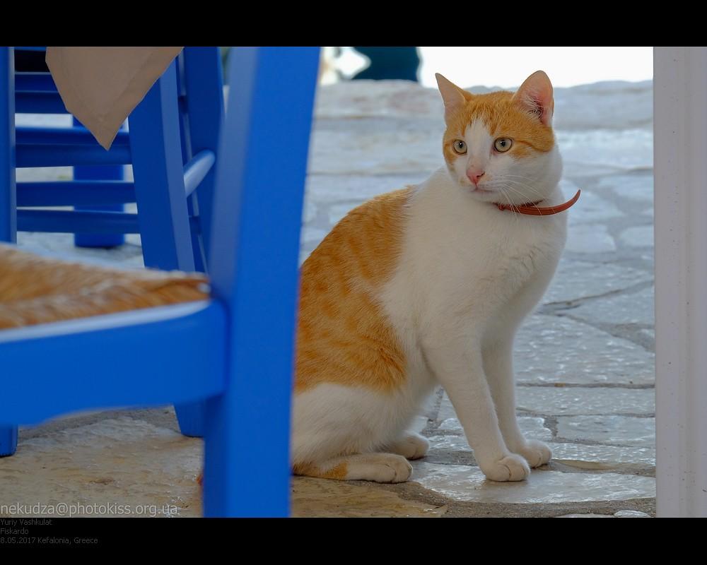 kefalonia_fiskardo_cat