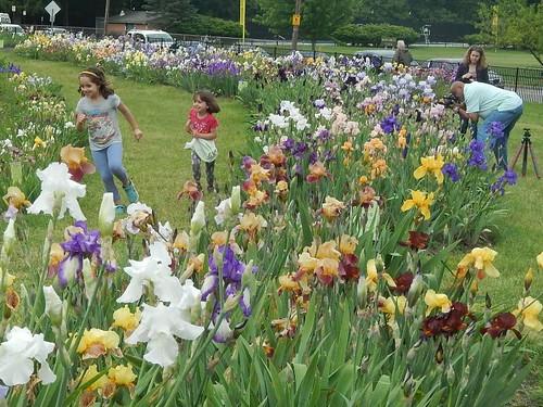 Presby Iris Gardens 2017