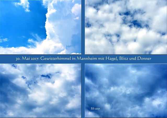 Wetter Mannheim (Seckenheim) am 30. Mai 2017: Gewitter mit Blitz, Donner, Hagel und heftigem Wind --- die Balkon-Malve hat überlebt ... Foto: Brigitte Stolle